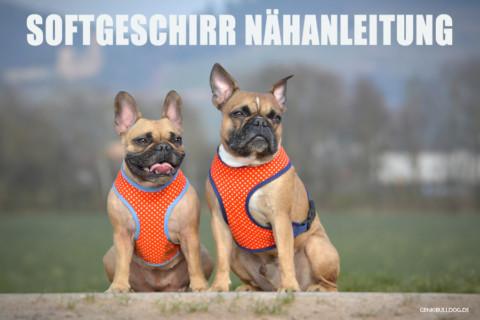 DIY – Softgeschirr für Hunde selbst nähen