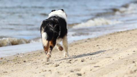 Urlaub mit oder ohne Hund?