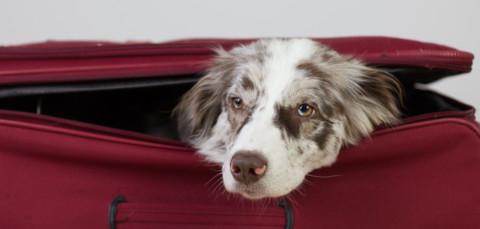 Travel Essentials für den Urlaub mit Hund