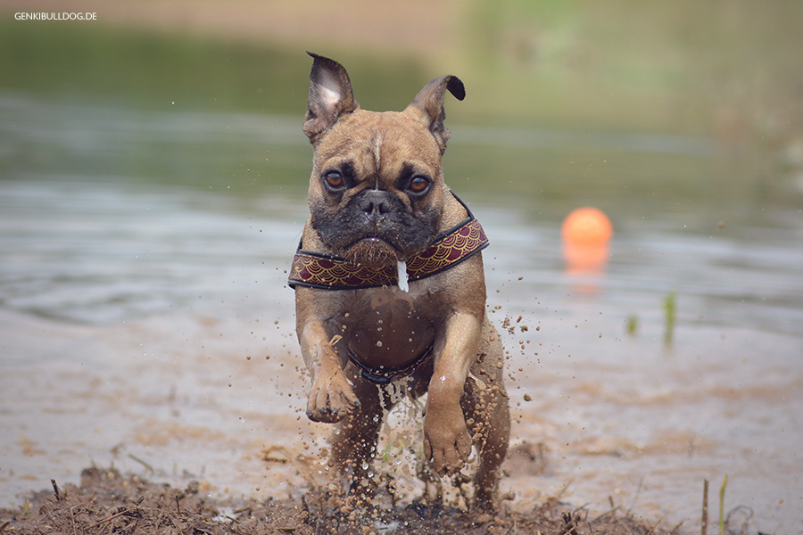 Hundeblog Hunde schwimmfaul
