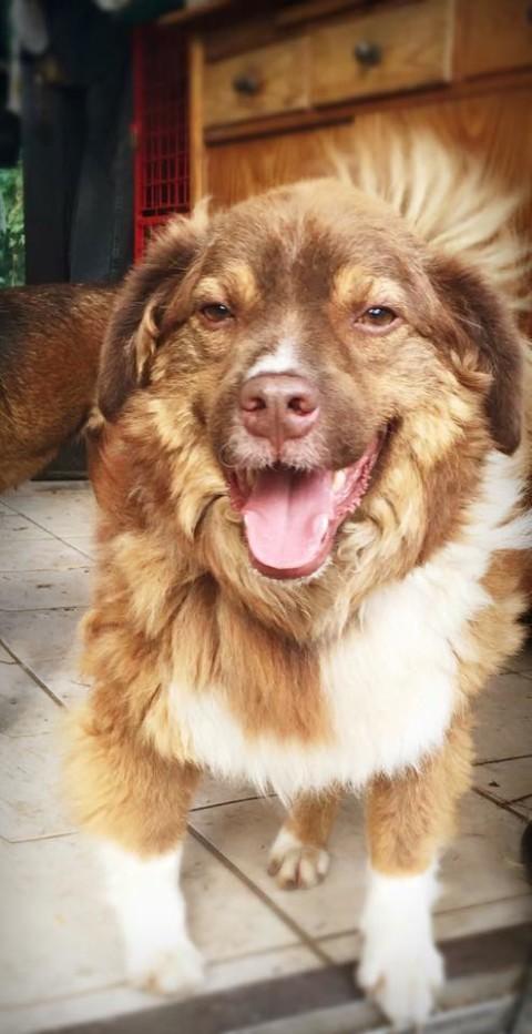 Von Gewittern und Schlüsselbunden – Oder: Ist Jimmi ein Angsthund?