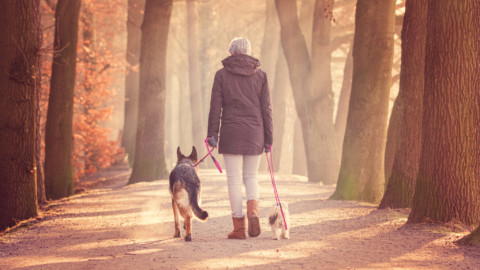 Die Hundeleine – ein Fluch oder ein Segen?