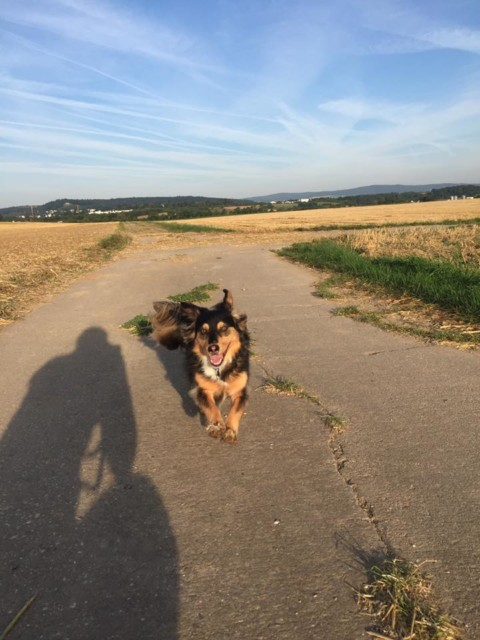 Tierschutzhund = Problemhund?