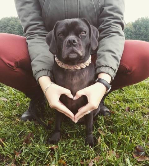 Team Hundeseele – [BlogparadeTierbestattung] – Ich rede über meine Gedanken & Gefühle