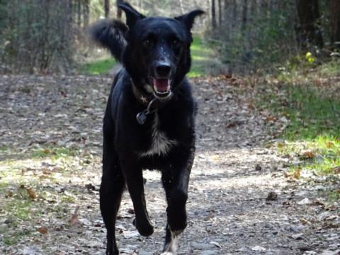 Ein Hund mit Handicap ist kein Handicap – Ein Gastbeitrag von Sandra vom Blog Dreipunktecharlie