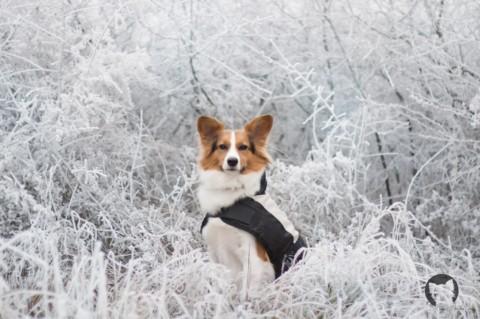 Angsthunde aus dem Tierschutz – Wie wir Kaya die Angst genommen haben