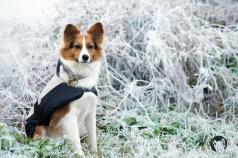 Indoor Auslastung – Wie beschäftige ich meinen Hund zu Hause am besten?