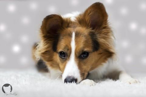 Wie Hund und Katz – Kaya's größte Macke