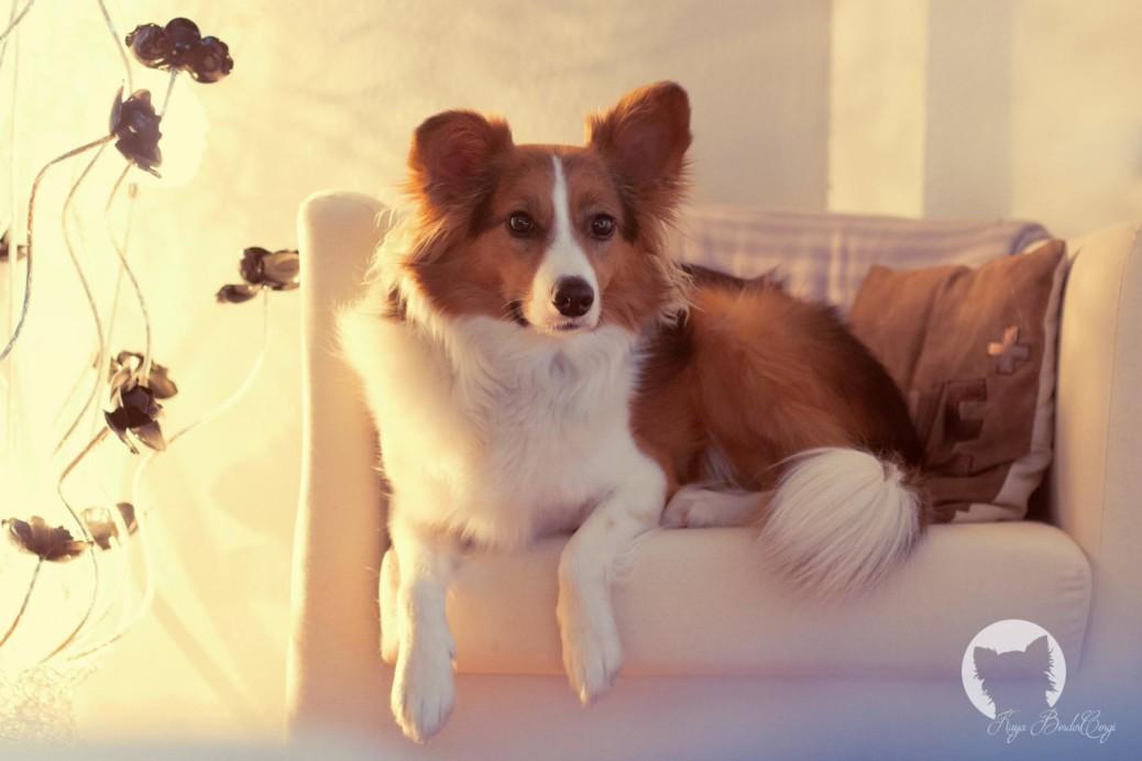 Hund und Job - wie geht das?