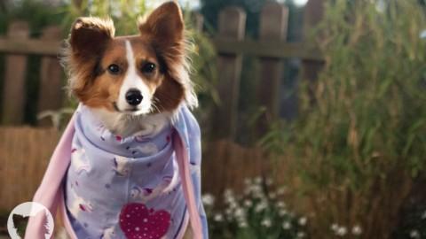 Radtour mit Hund – Vorbereitungen und Checkliste