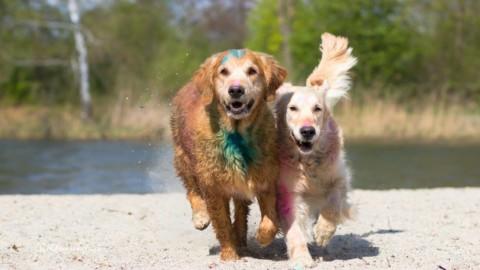 Farbenfroh mit Holi