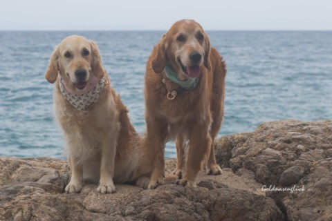 Kroatien mit Hund – 1 Woche auf Krk