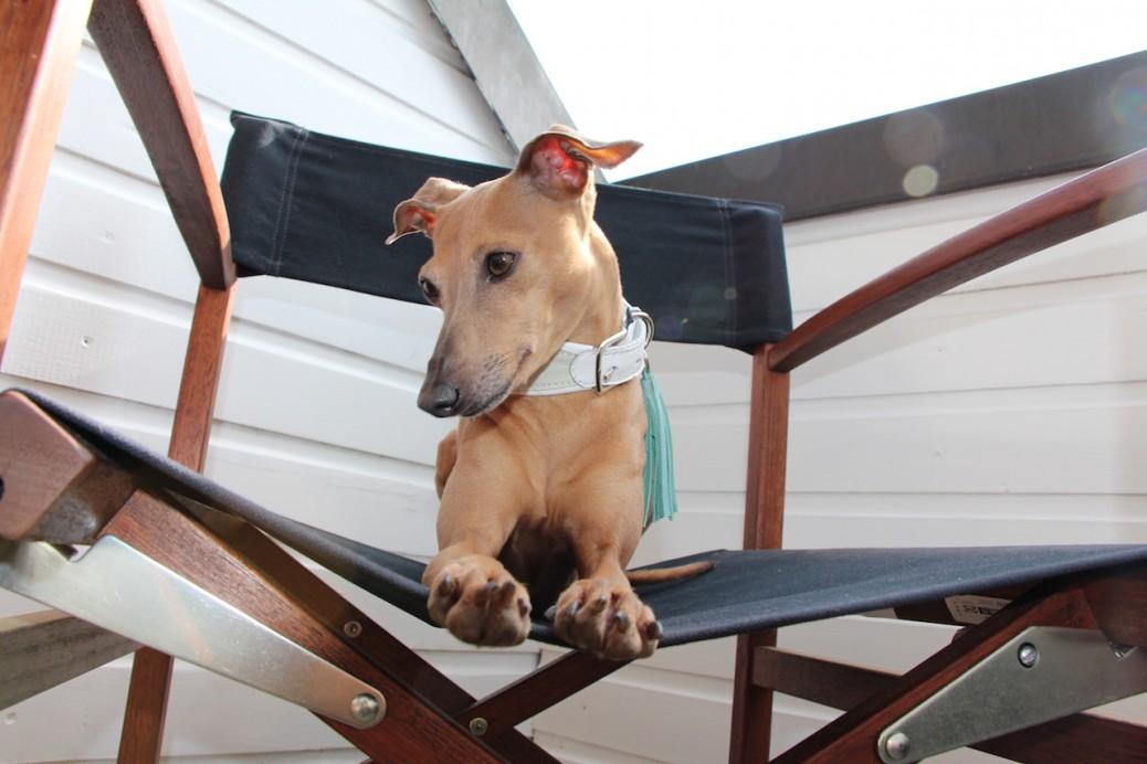 Hundeblog Halsband