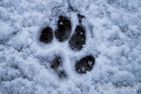 [Impressionen aus dem Schnee]