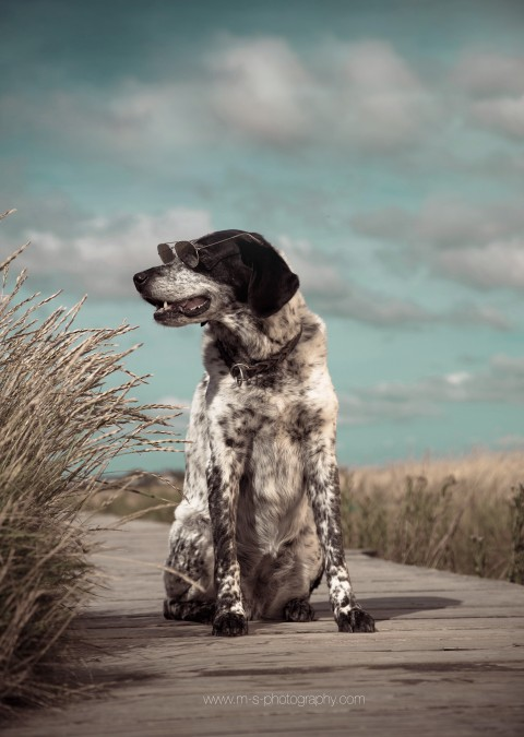 Hunde und Angst vor Menschen