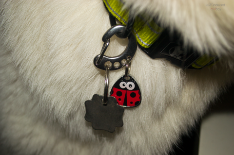 Getestet: Hundeidentifikationsmarken