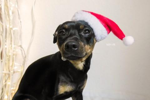 [Weihnachtsgeschichte] von Melody und Buddy