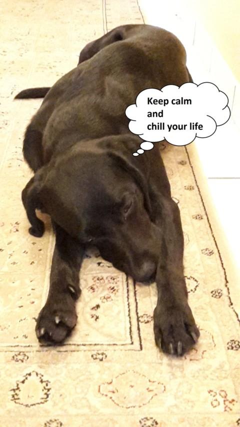 10 Arten von Hundebesitzern und nicht-Hundebesitzern, ohne die das Leben einfacher wäre!!! Teil 1/5