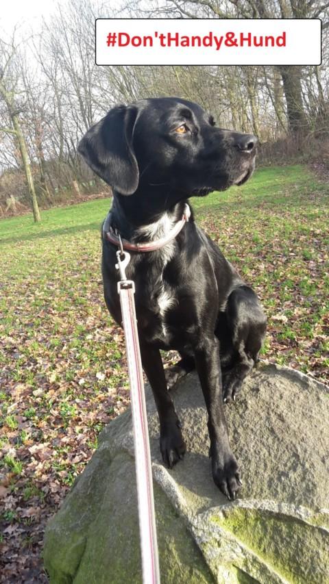 10 Arten von Hundebesitzern und nicht-Hundebesitzern, ohne die das Leben einfacher wäre!!! Teil 2/5