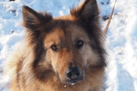 Winterliche Gaumenfreuden – Pferdeäpfel für den Hund?