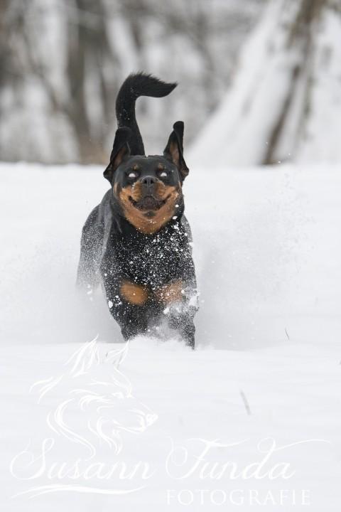 Der Hund von Baskerville…