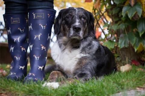 Typisch Hundehalterin … oder? 15 Fakten!