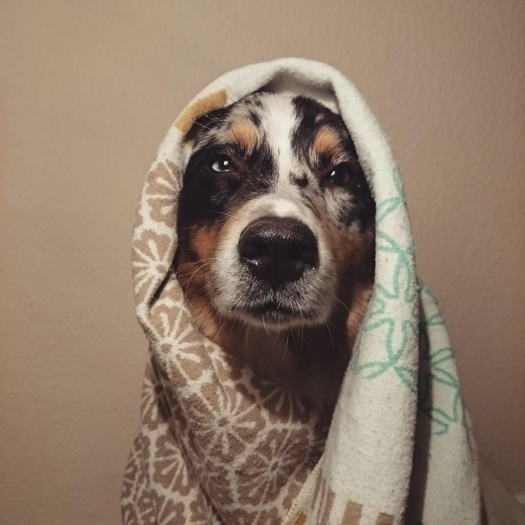 Therapiehund Alltag