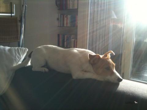 Training mit einem ängstlichen Hund: Die Grundlagen