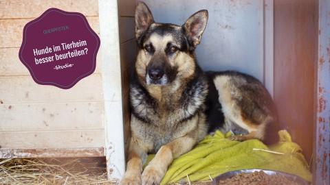 [Studie] Hunde im Tierheim sollen einheitlich beurteilt werden