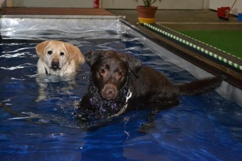 Ein toller Nachmittag im Hundeschwimmbad