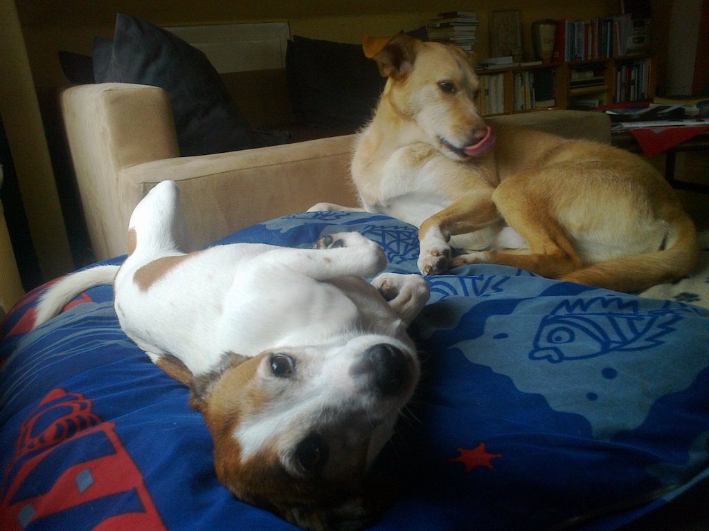 Humor Die Fabelschmiede Hundeblogger miDoggy