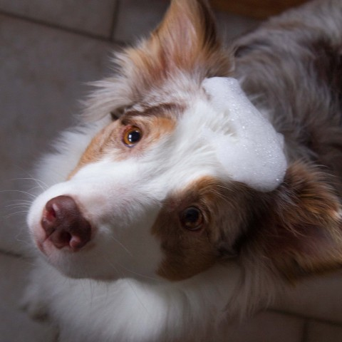 Microfaserhund