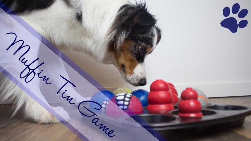 Australian Shepherd Intelligenzspielzeug Hundeblog miDoggy