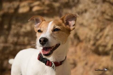 Wie ist es mit dem Hund im Urlaub an der Algarve in Portugal zu sein?