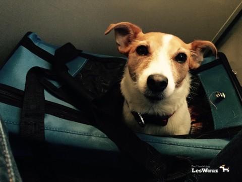 Der Hund fliegt mit in der Kabine – unsere Erfahrungsbericht