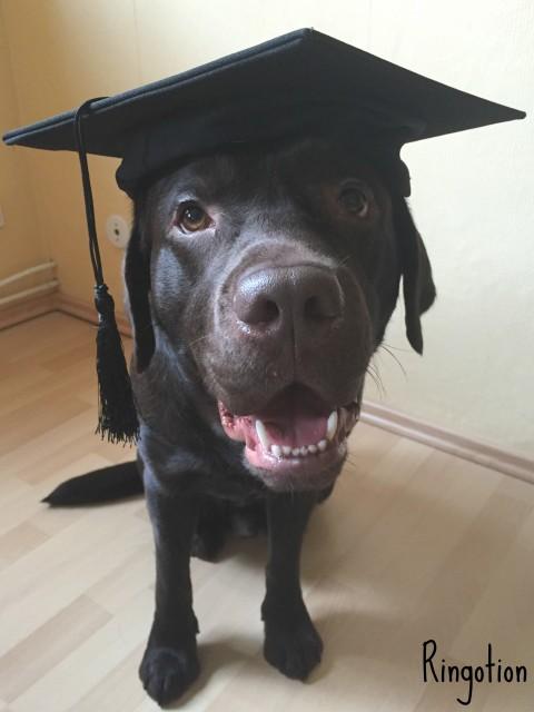Das Leben als Studentenhund