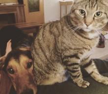 Das Leben mit Tieren bereichert das Leben