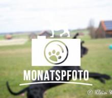 """[Monatspfoto """"Wir suchen den Osterhasen!"""" März 2016]"""