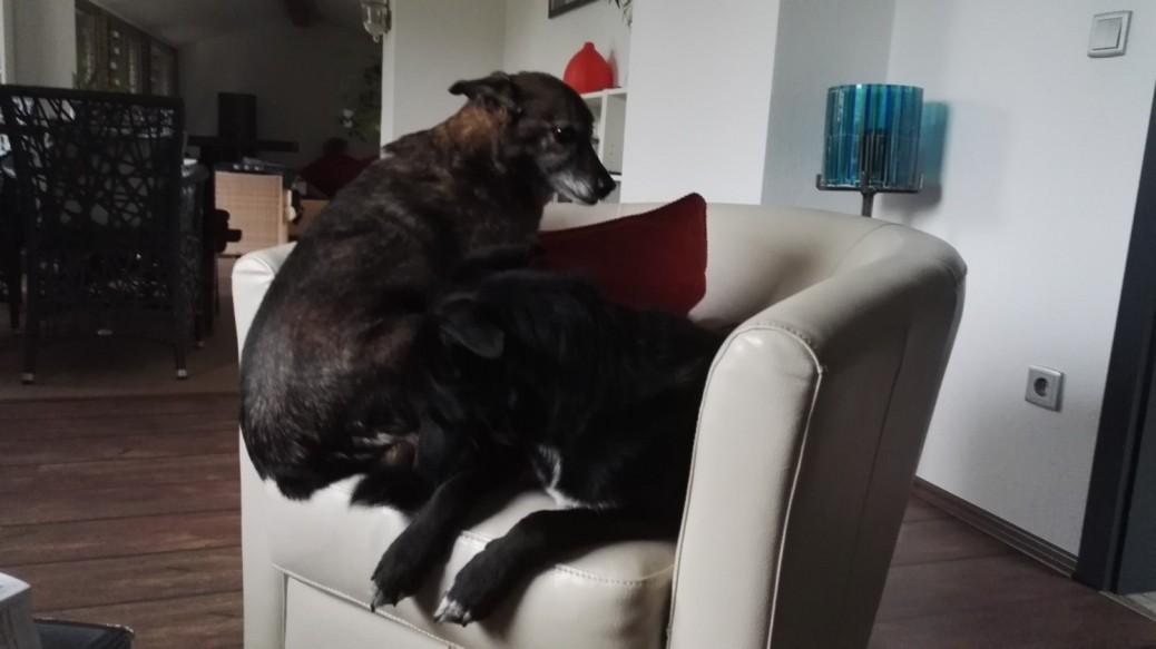 Ressourcen bei Hunden