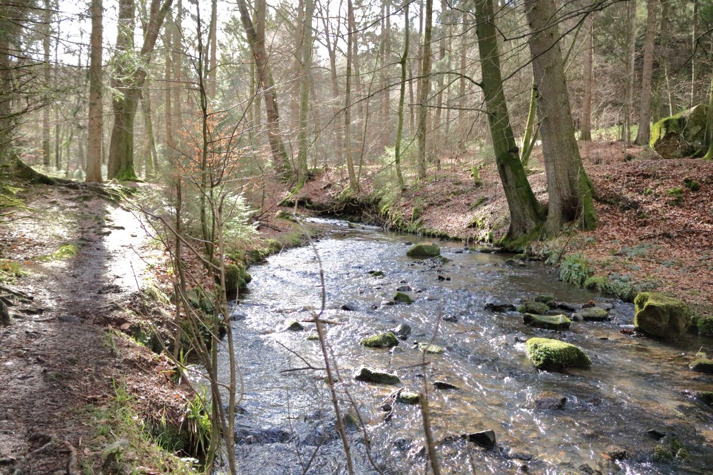 Teutoburger Wald mit Hund