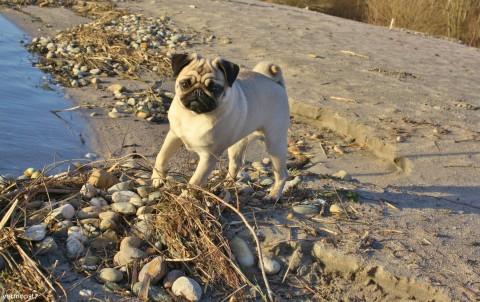 Hundestrände an der Nord-und Ostsee