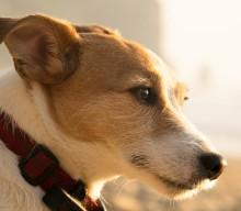 Urlaub mit Hund: was ist anders und gibt es wirklich einen Urlaubsblues?