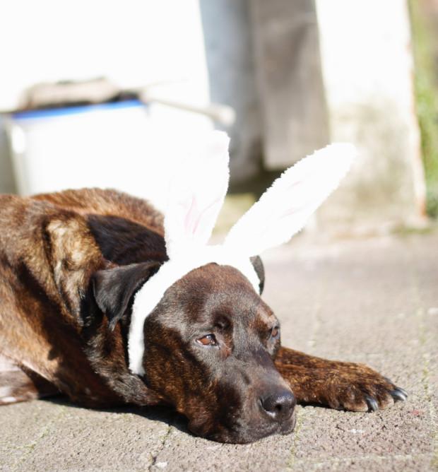 Monatspfoto Hundeblogger