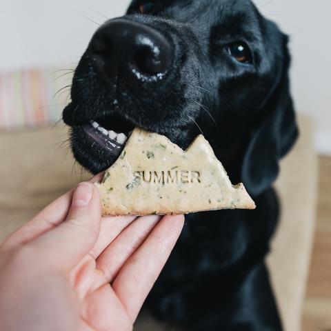 Jam jam… Leckere Cookies von der Wanderr[o]ute