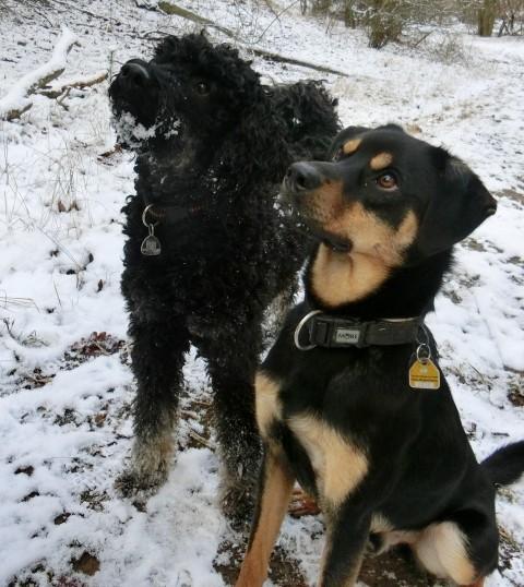 Wenn ich Hundetrainer in Deutschland wär…