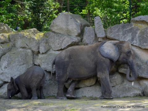 Wellnesstag bei den Elefanten