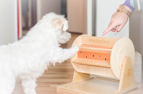 Wir durften für euch testen: Intelligenzspielzeuge von My Intelligent Dogs!