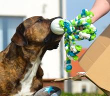 Eine Wunschtüte welche Hunde- und Herrchenaugen strahlen lässt
