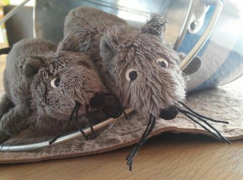 Erster Schultag: Ratten fangen!