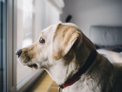 Hüftdysplasie beim Hund – was bedeutet es für deinen Vierbeiner?